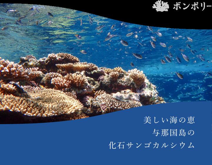 美しい海の恵、与那国島の化石サンゴカルシウム