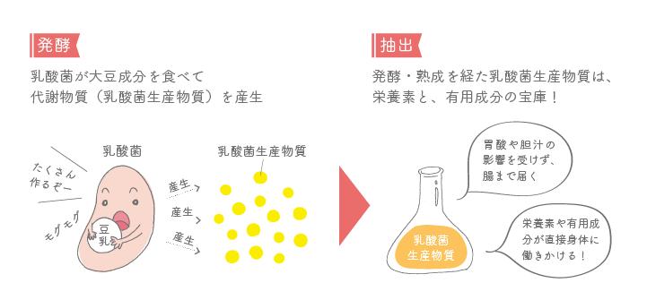 イラスト乳酸菌生産物質って何だろう?
