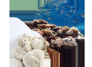 与那国島の海と化石サンゴ
