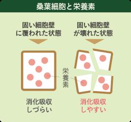 桑葉細胞と栄養素