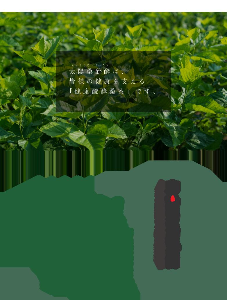 太陽桑醗酵は、皆様の健康を支える「健康醗酵桑茶」です。